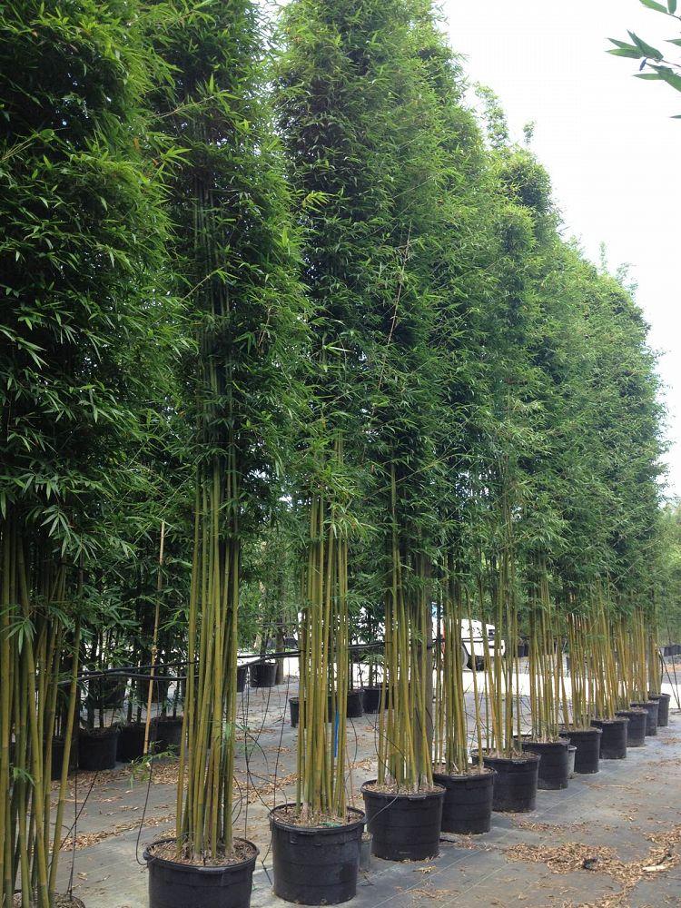 Bambo Weavers Privacy Screening Install Price