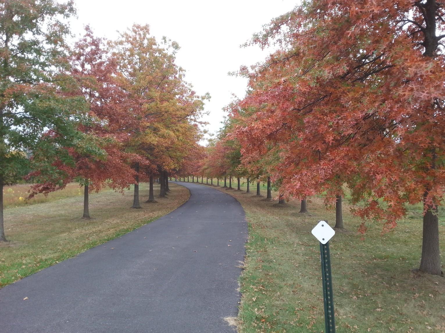 Legacy-Plantings-Red-Oak