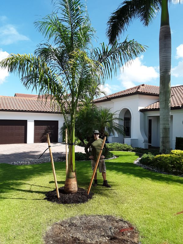 12-14 ft Royal Palm Install Price