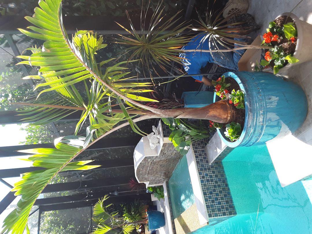 Lanai Planters landscaping ideas