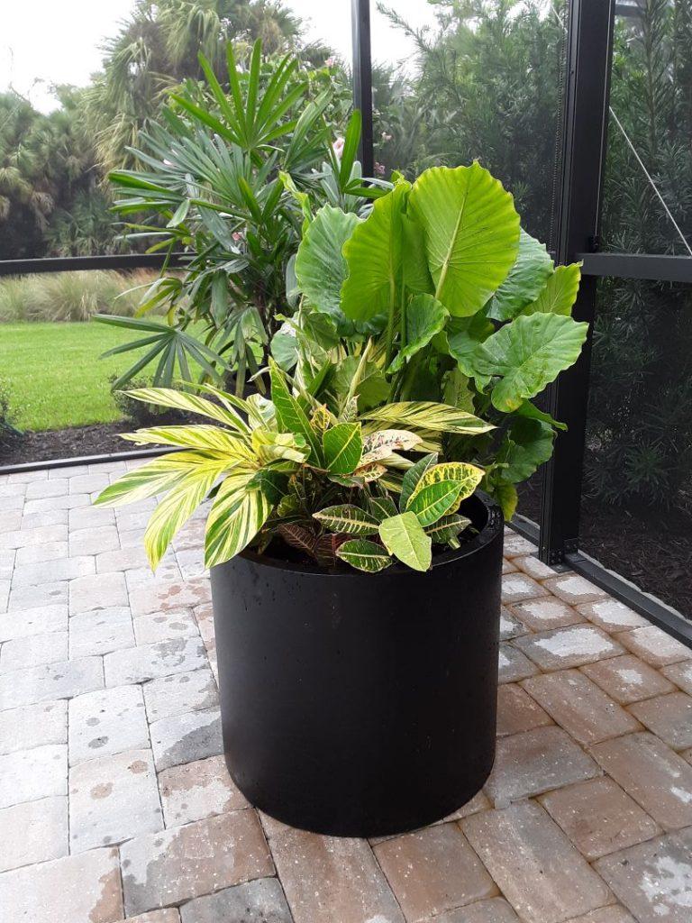 tropical planter 1