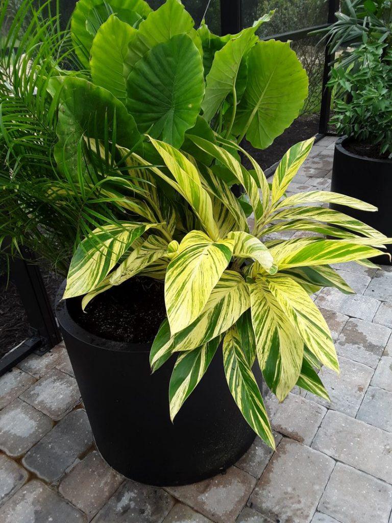 tropical planter 2