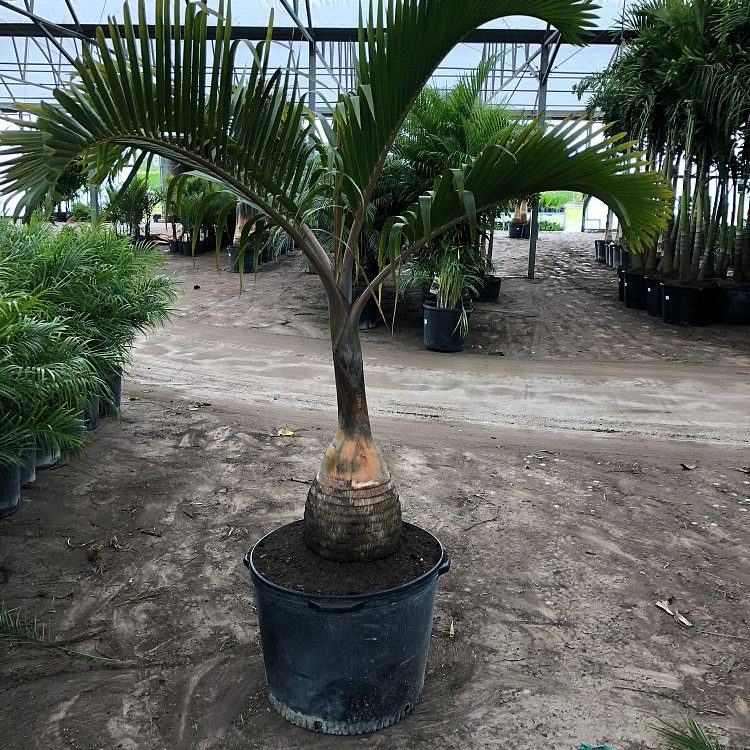 25 gallon Bottle Palm Install Price
